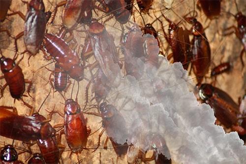 Избавление от насекомых с помощью тумана