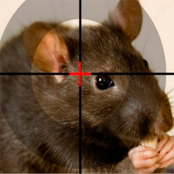 Дезинфекция от крыс и мышей