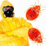 Сколько живут клопы после дезинфекции