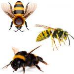 Важная информация о пчёлах осах и шмелях в чем их различие поведения и жизнидеятельности?