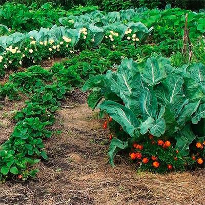 Сад и огород без сорняков