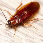 Чем тараканы опасны для здоровья людей