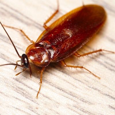 Чем тараканы опасны
