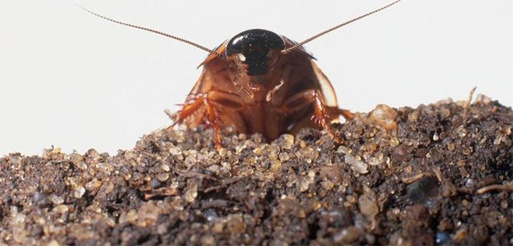 тараканы в общежитие