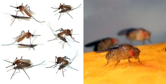 комары и мошки