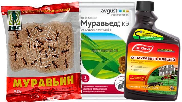 Как сделать средство от муравьев средствами