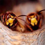Гнездо шершней поиск и уничтожение