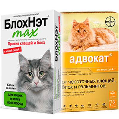 Royal Canin Mother Babycat gnstig bei zooplus